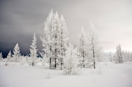 night in the winter forest photo