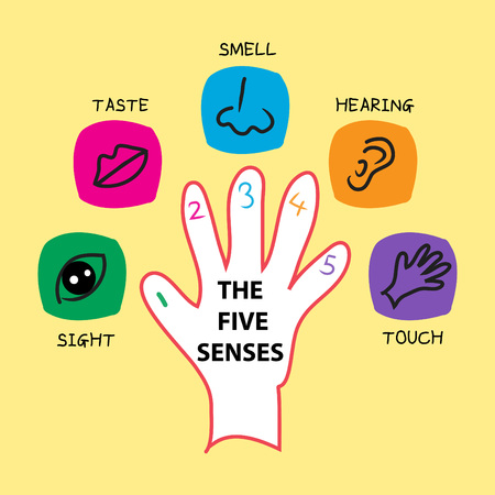 The five senses vector design with different body parts.