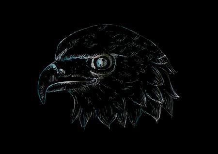 Eagle head Template. Hand draw illustration.