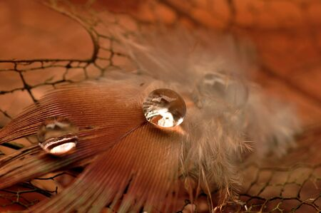 Bird Feather with Water Droplets