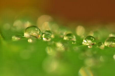 Close up beautiful green leaf rain