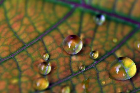 Close up beautiful green leaf rain