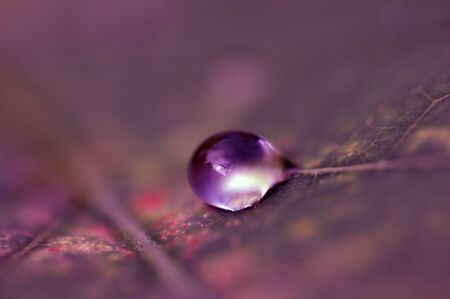 Water drops on leaf , 写真素材
