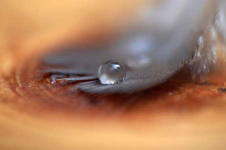 Feather with water drop Foto de archivo