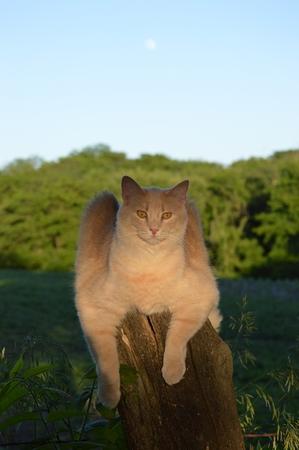 fencepost: Cat sitting on the fencepost Stock Photo