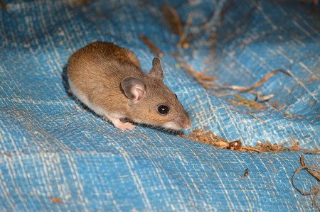 Maus fand sich versteckt Standard-Bild - 82009972