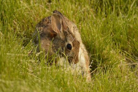 Rabbit in the green grass