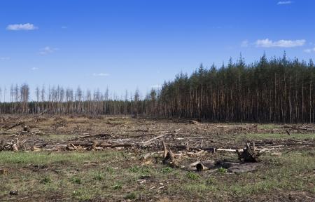 燃やされた森林を切断 写真素材