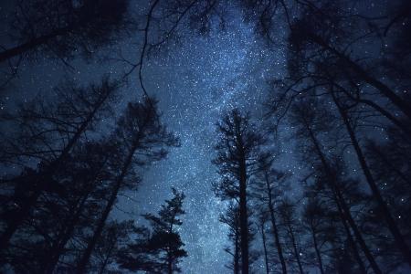 noche: un hermoso cielo de la noche, la Vía Láctea y los árboles Foto de archivo