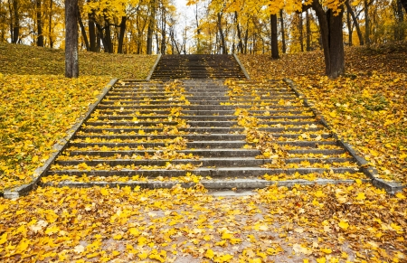 steps in the yellow leaves in autumn