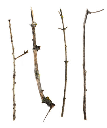 Sticks and twigs isolated on white background photo