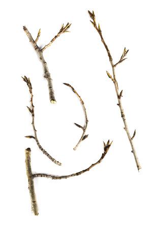 スティックや小枝の白い背景で隔離