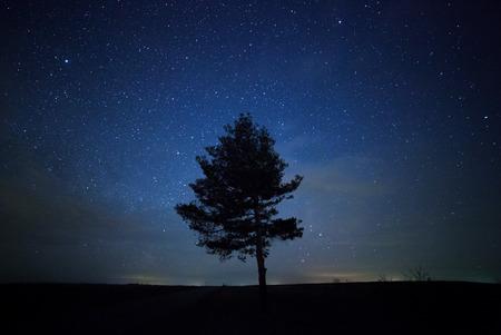 美しい夜の空、天の川、木