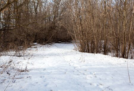 snow clearing: snow clearing in the woods the day