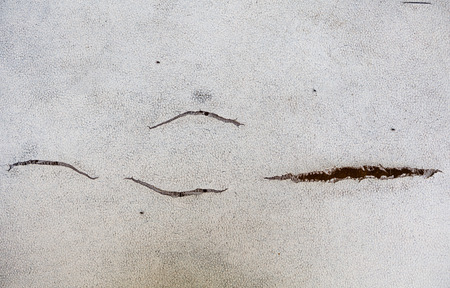 texture cracks on artificial skin