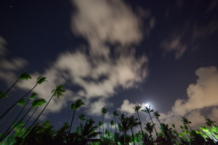 a beautiful night sky, stars and the palm trees