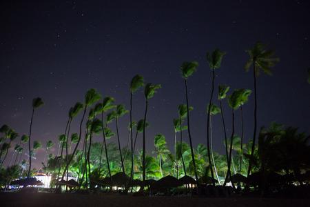 美しい夜空、星とヤシの木