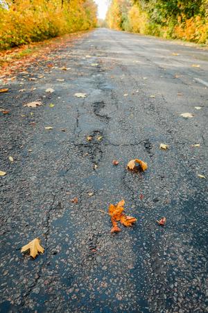 日の秋の道