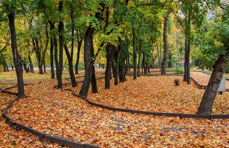 1 日で秋の公園