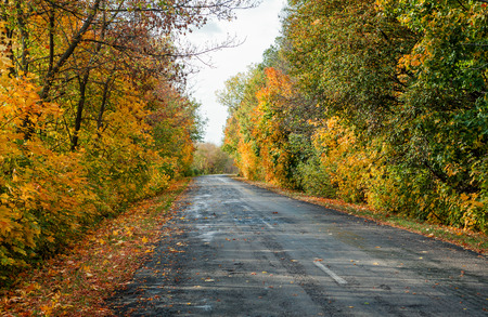 autumn road in the day