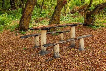 秋の森のベンチ 写真素材