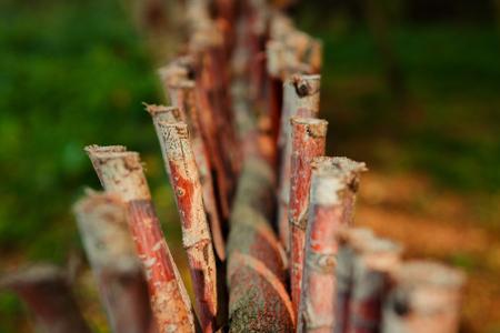 小枝のクローズ アップのフェンス
