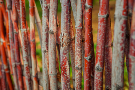 fence of twigs closeup
