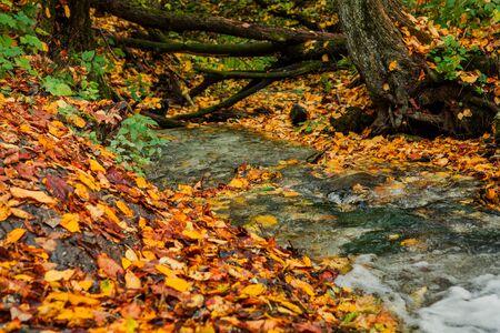 秋の森の小川 写真素材