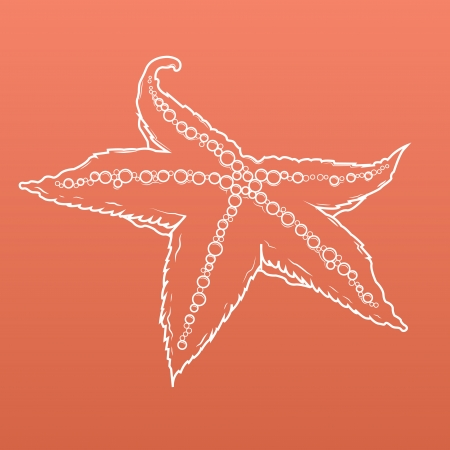 Detailed white outlines of starfish isolated on orange background. Seastar. Vector illustration. Illustration