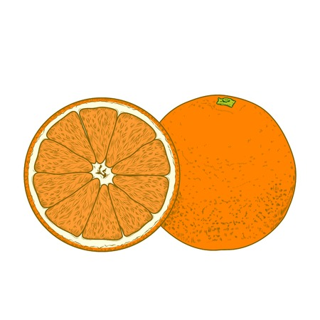 Sliced orange fruits isolated on a white background. Hand drawn color line art. Retro design. Vector illustration.