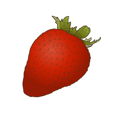 Strawberry fruit isolated on a white background. Hand drawn color line art. Retro design. Vector illustration.