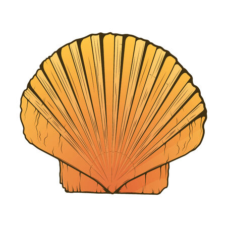 Sea Shell isolated on a white background. Color line art. Retro design. Illustration