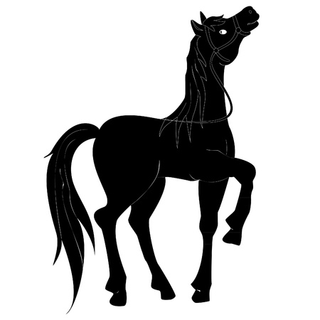 black horse on a white background with a proud carriage