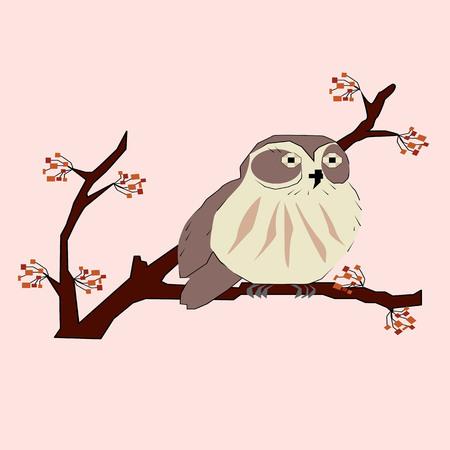 owl, sitting on Vetko kotoraja