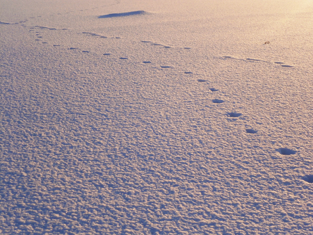 Footprints in the Snow photo