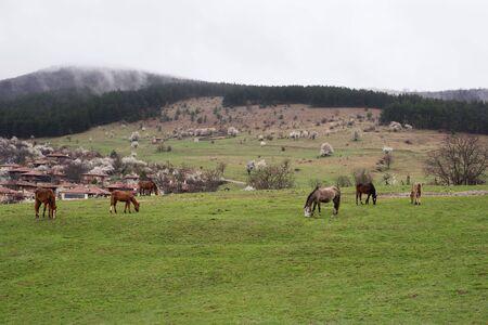 folk village: Horses grazing in the roadside pasture. View of folk museum Zheravna village in Bulgaria. Mountain village. Stock Photo
