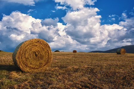 Hay bales on the field after harvest, a clear day. Blue sky, white clouds.