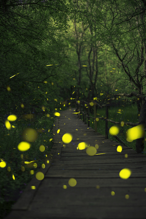 Fireflies in a fairy forest. Wooden bridge in a forest. Bulgaria