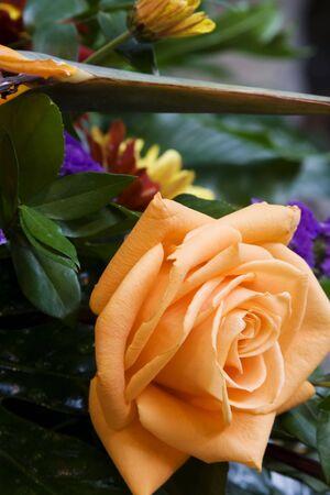 flores peque�as: Cierre para arriba de rosas del melocot�n algunas flores peque�as Foto de archivo