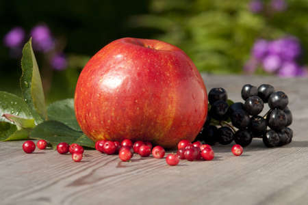 The red apple and aronia melanocarpa