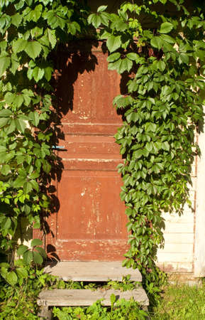 The old door twined an ivy photo