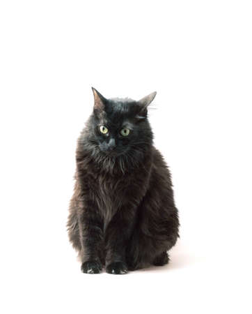 black cat in front on  white background