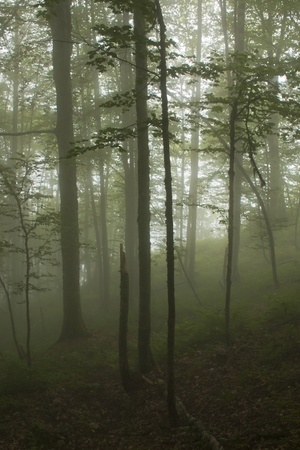 Fog in wood on mountain slope Stock Photo