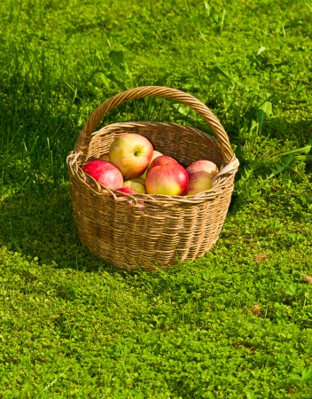 basket with apples on a grass