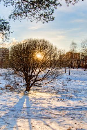Winter sunset in city park Stock Photo