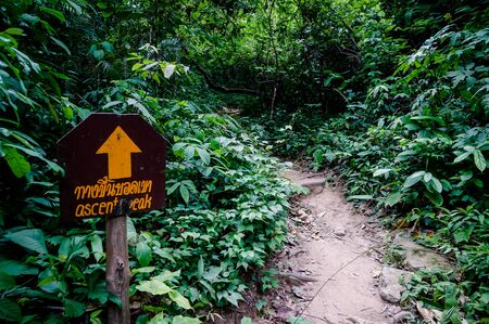 Trail through tall trees in a lush forest The cliff is a rocky layer with soil Adventurous trekking trail ravine forest landscape sunny summer day Ramkhamhaeng National Park, Sukothai, Thailand,