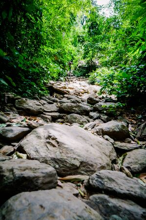 Trail through tall trees in a lush forest The cliff is a rocky layer with soil Adventurous trekking trail ravine forest landscape sunny summer day Ramkhamhaeng National Park, Sukothai, Thailand, Stock fotó