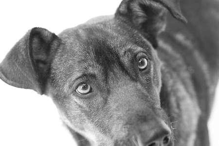 mirada triste: Oscuro perro con mirada triste