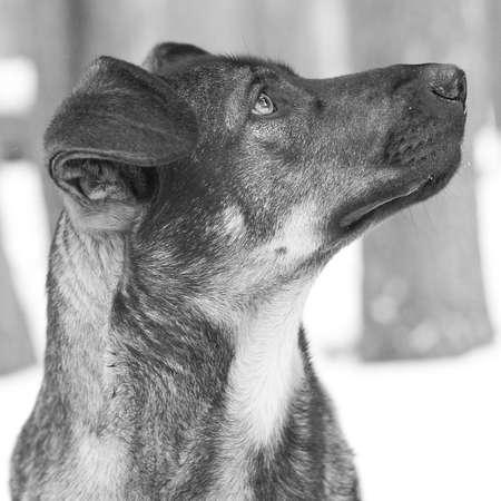 mirada triste: Fac� �ark perro con triste ver en el perfil  Foto de archivo