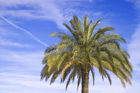 One palm tree on cloud blue sky Stock Photo - 3828086